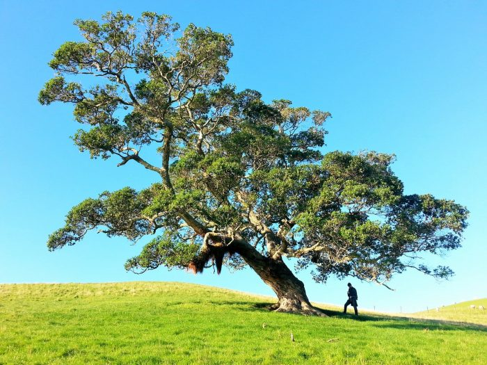 4 Spectacular Tree Climbing Adventures